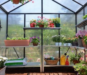 Inside view of the Palram Glory greenhouse.