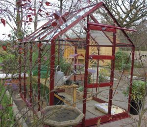 Elite High Eave Greenhouse in Berry